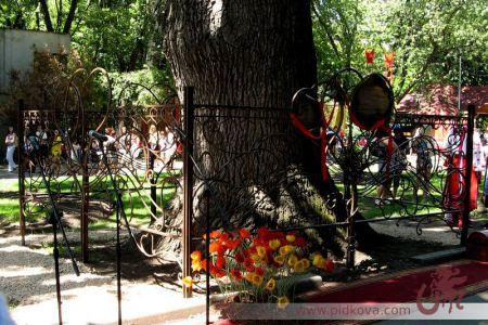 Кованый забор вокруг дуба в саду Шевченко